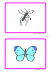 Insects_card