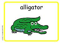 Alligator_2